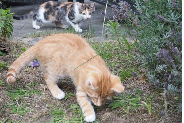 Im Garten...